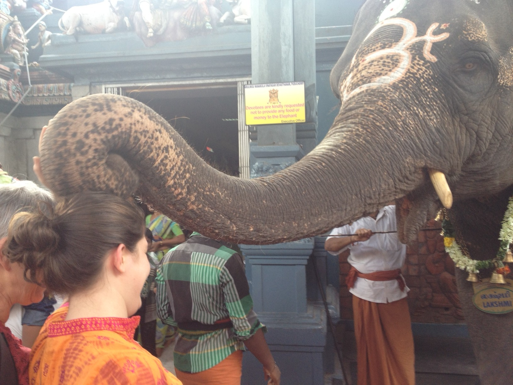 elephant-e1355717606536